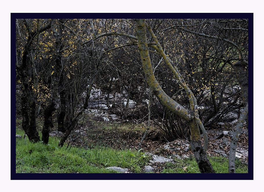 20151212 Manzanares El Real 46p